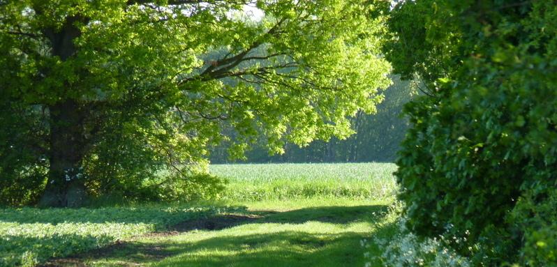 Slamseys Farm towards Grove Field