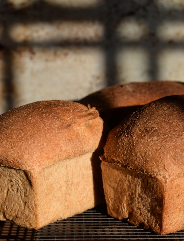 freshly baked bread cooling in evening sunshine