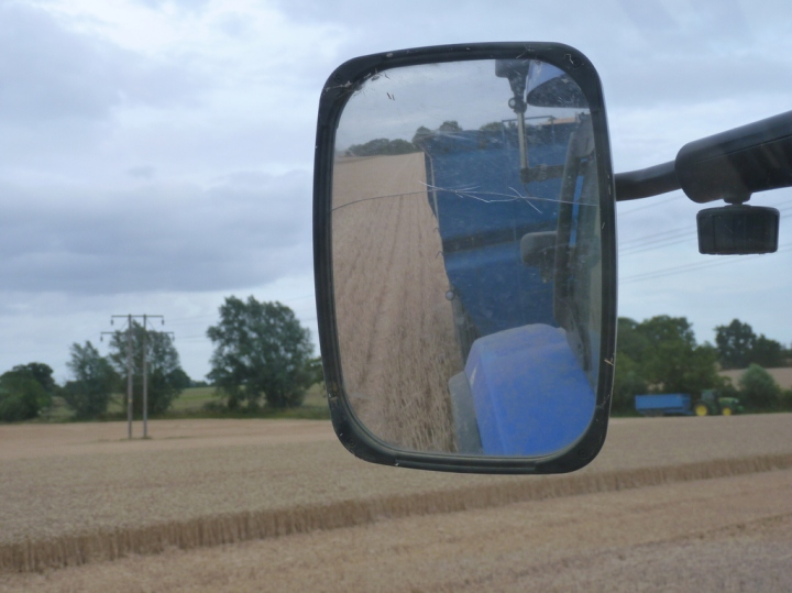 harvesting wheat - view from the tractor cab