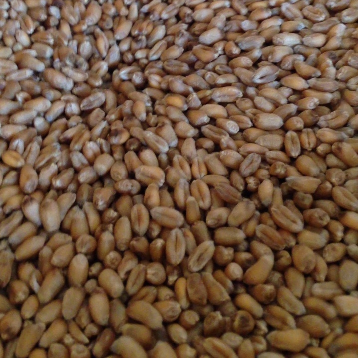 Skyfall wheat grains