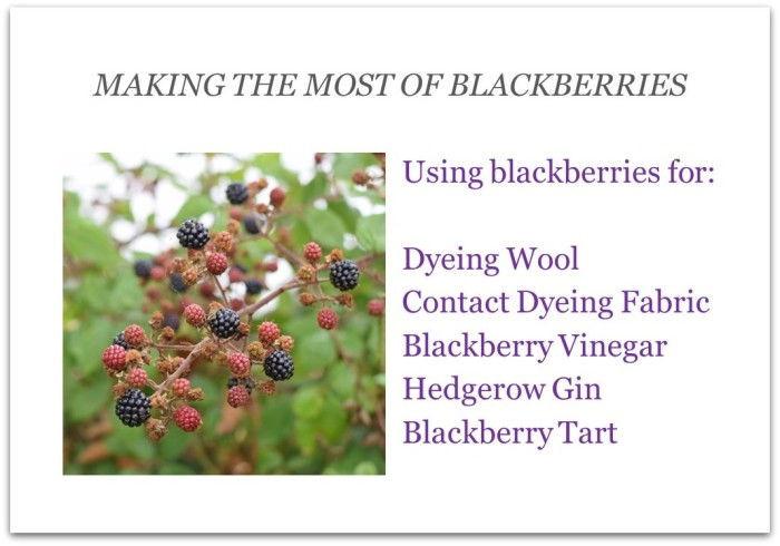 Making the most of blackberries - instructions for dyeing, preserving, cooking