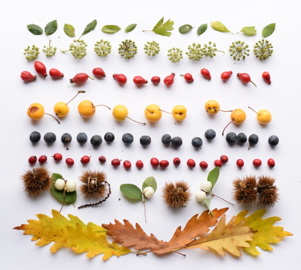 Autumn leaves, ivy, rosehips, crab apples, sloes, hawthorn berries, sweet chestnuts, snowberries, oak leaves