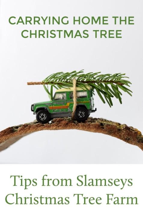 carrying home the christmas tree tips from slamseys Christmas tree farm