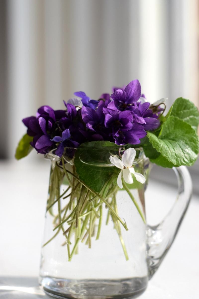 jug of wild violets