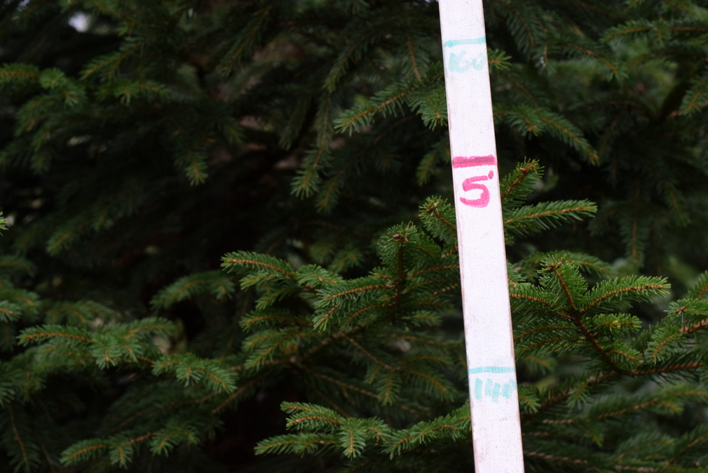 Rustic measuring stick leaning on Christmas tree