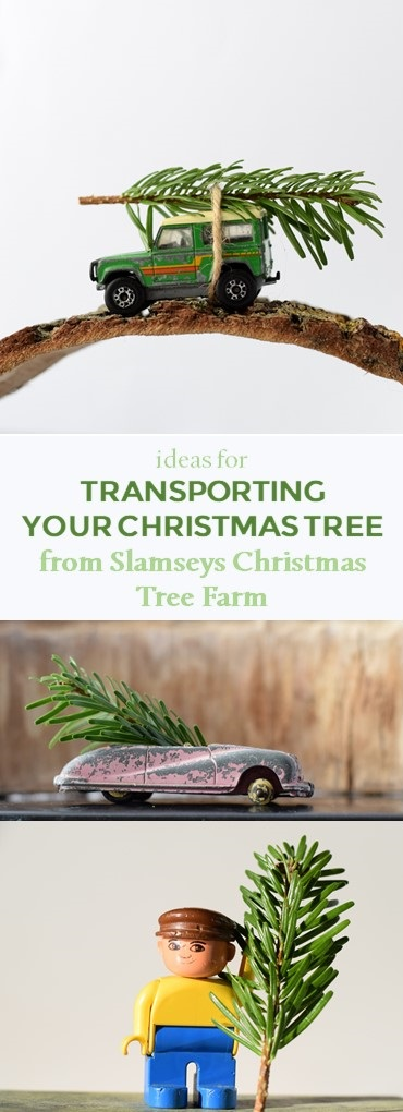 Ideas for transporting your Christmas tree from Slamseys Christmas Tree Farm