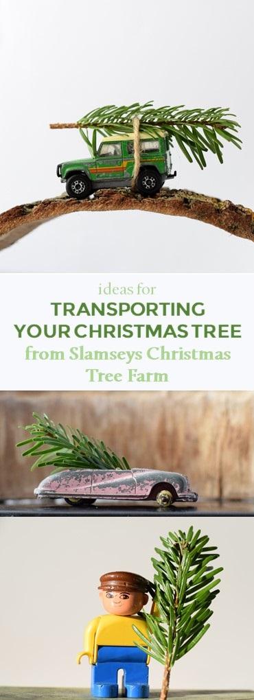 Ideas for transporting your Christmas tree from Slamseys Christmas Tree Farm