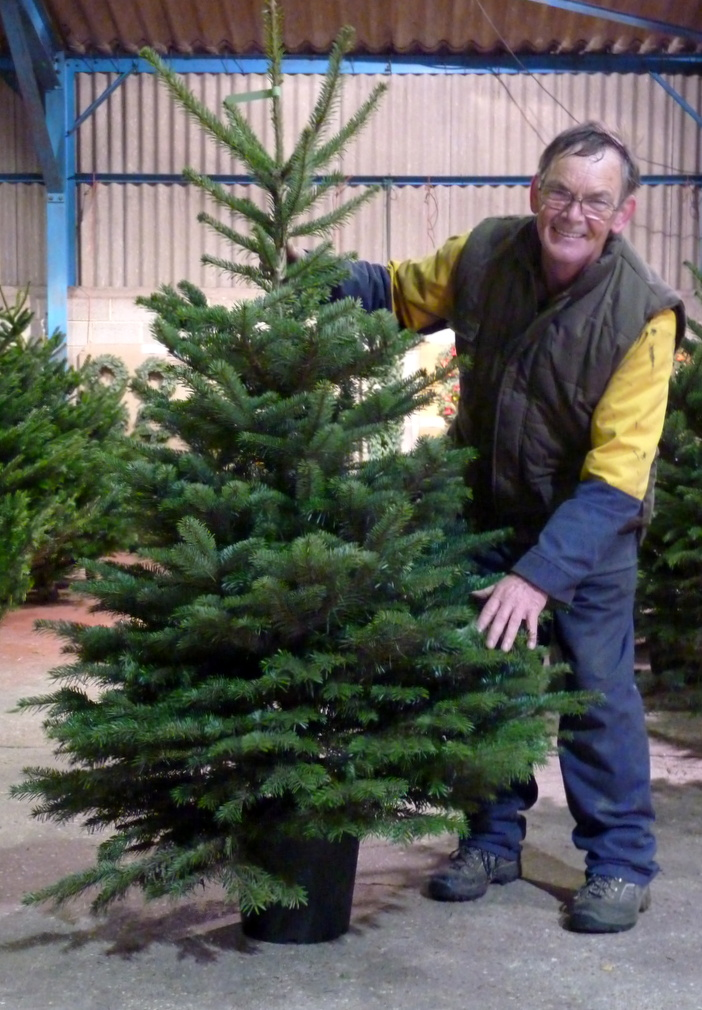 Buying a Christmas tree from your local Christmas tree farm