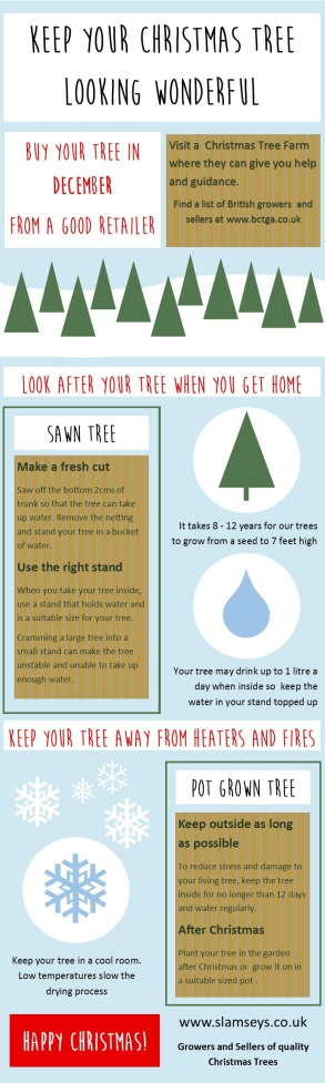 how to keep your Christmas tree looking wonderful