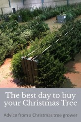 The best day to buy your Christmas Tree | Advice from a Christmas Tree grower