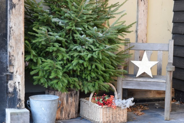 Christmas tree outside barn at Slamseys