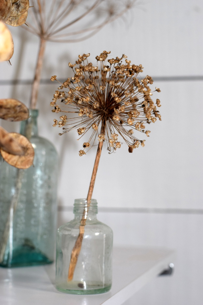Dried seedhead display in The Barley Barn, Essex