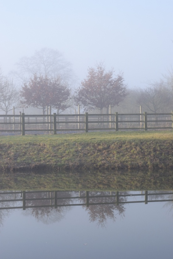 Trees and fence reflected in pond on misty February day