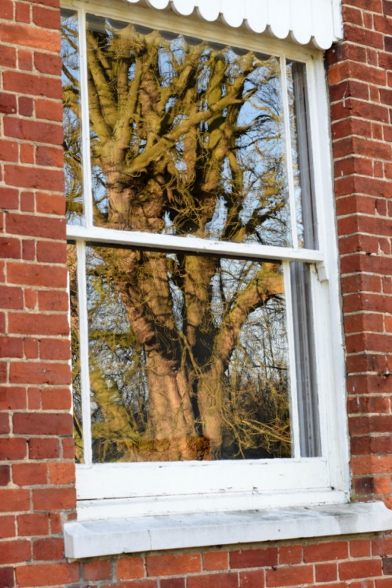 Reflection of tree in window