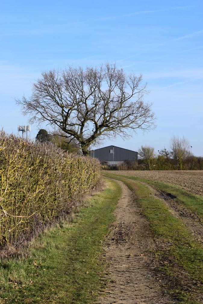 Farm track in March