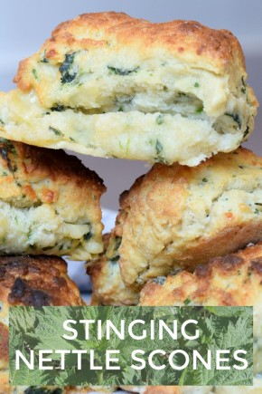 Recipe for Stinging Nettle Scones