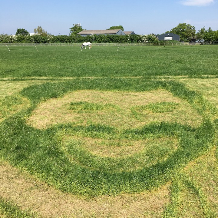 Prince Harry grass art for the Royal Wedding Harry and Meghan