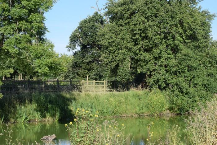Slamseys pond in summer