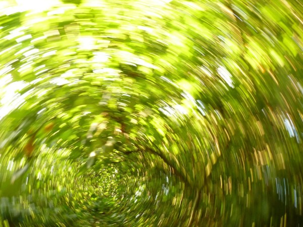 Under the tree canopy photographed by spinning camera