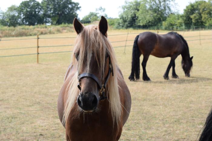 2018 hot summer horses in paddock