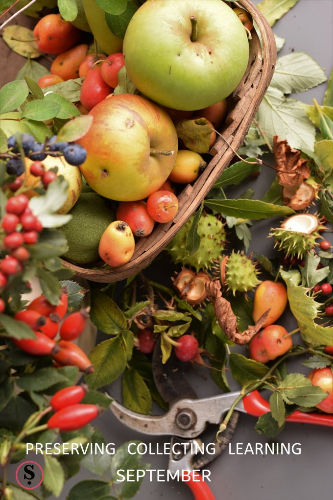 Trug and fruit, nuts, berries, foliage foraged in September