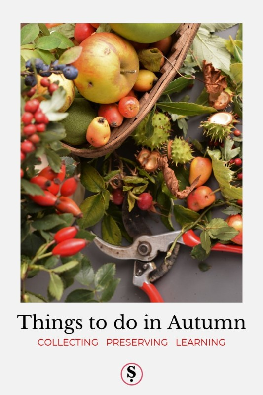 Autumn fruit, berries and foliage