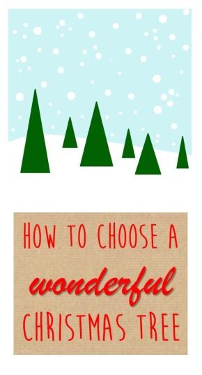 How to choose a wonderful fresh Christmas tree