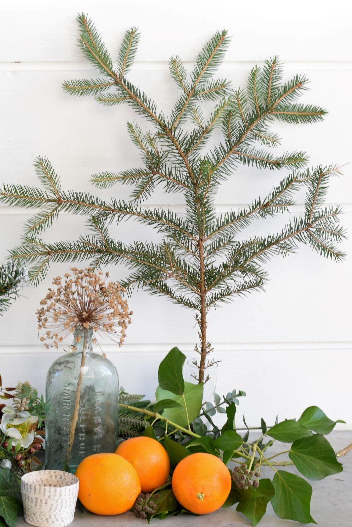 Christmas tree, seedhead, ivy and oranges