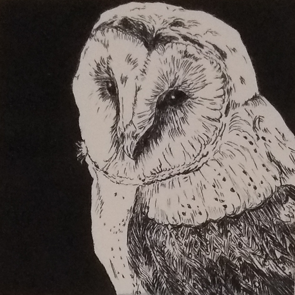 Student drypoint etching of an owl, Slamseys Printmaking