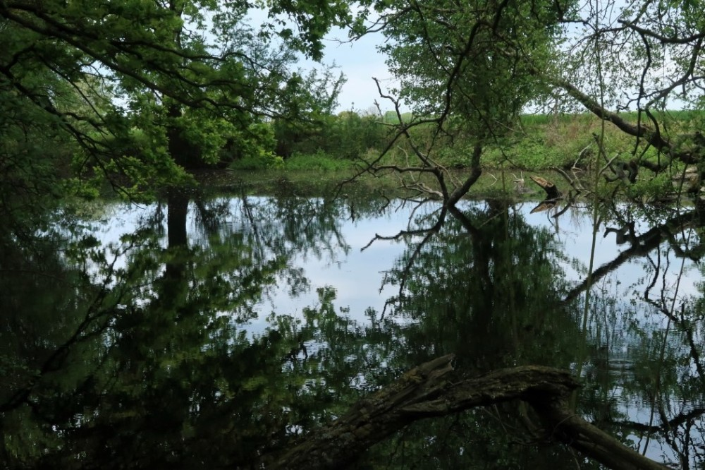 Pond with overhanging branches and reflections of trees