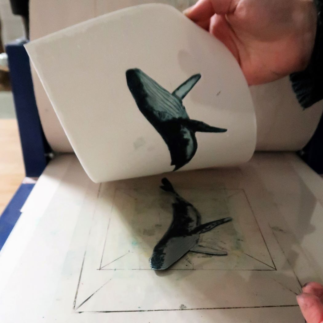 Pulling a print of whale
