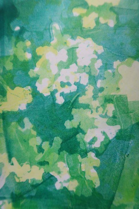 Botanical Jelly print of elderflowers
