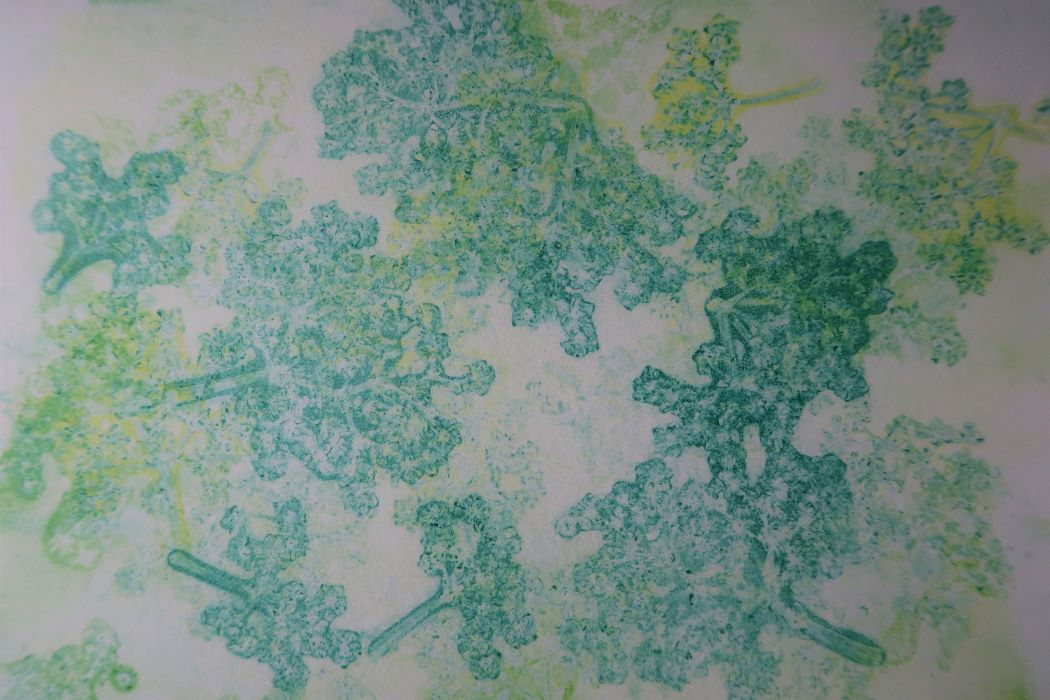 Botanical jelly print of elder flower