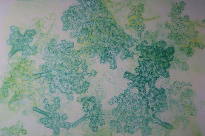 Botanical jelly print of elder flower
