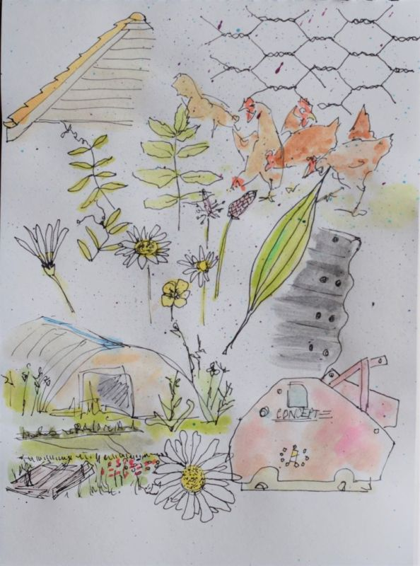watercolour illustrations on the farm