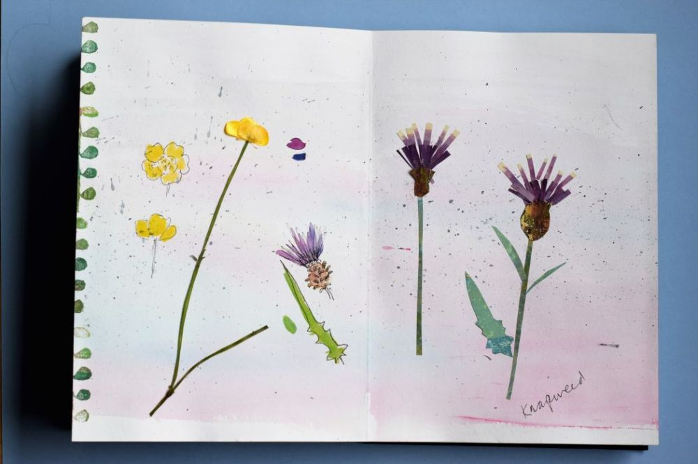 sketch and collage of knapweed, pressed buttercup