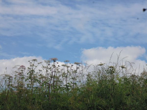 wild flowers on top of bank with blue sky