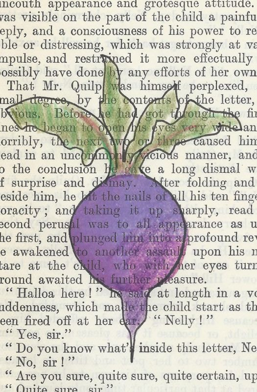 beetroot picture on old book page