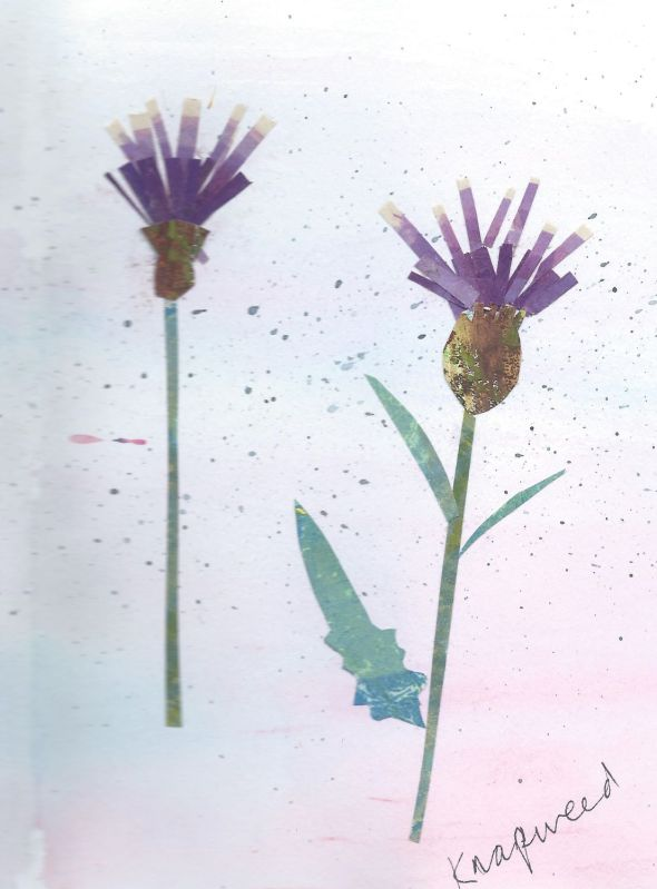 Collage of knapweed