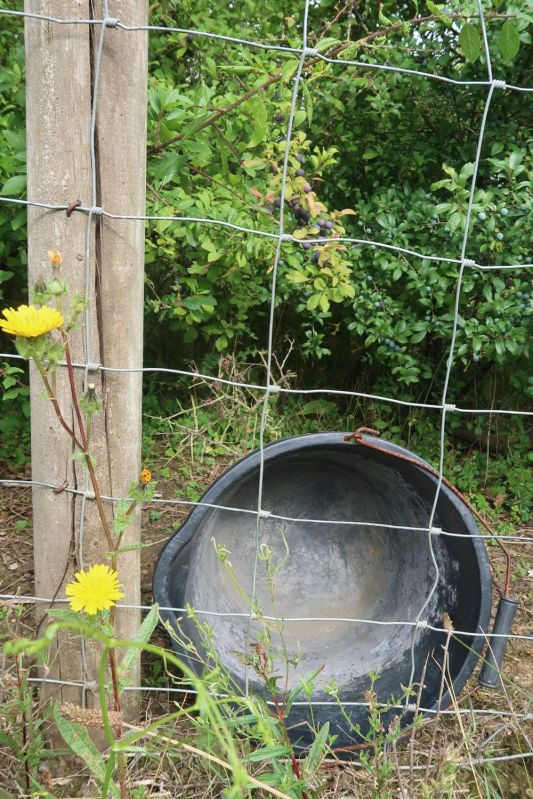 fence post and upturned bucket forming a 'b'