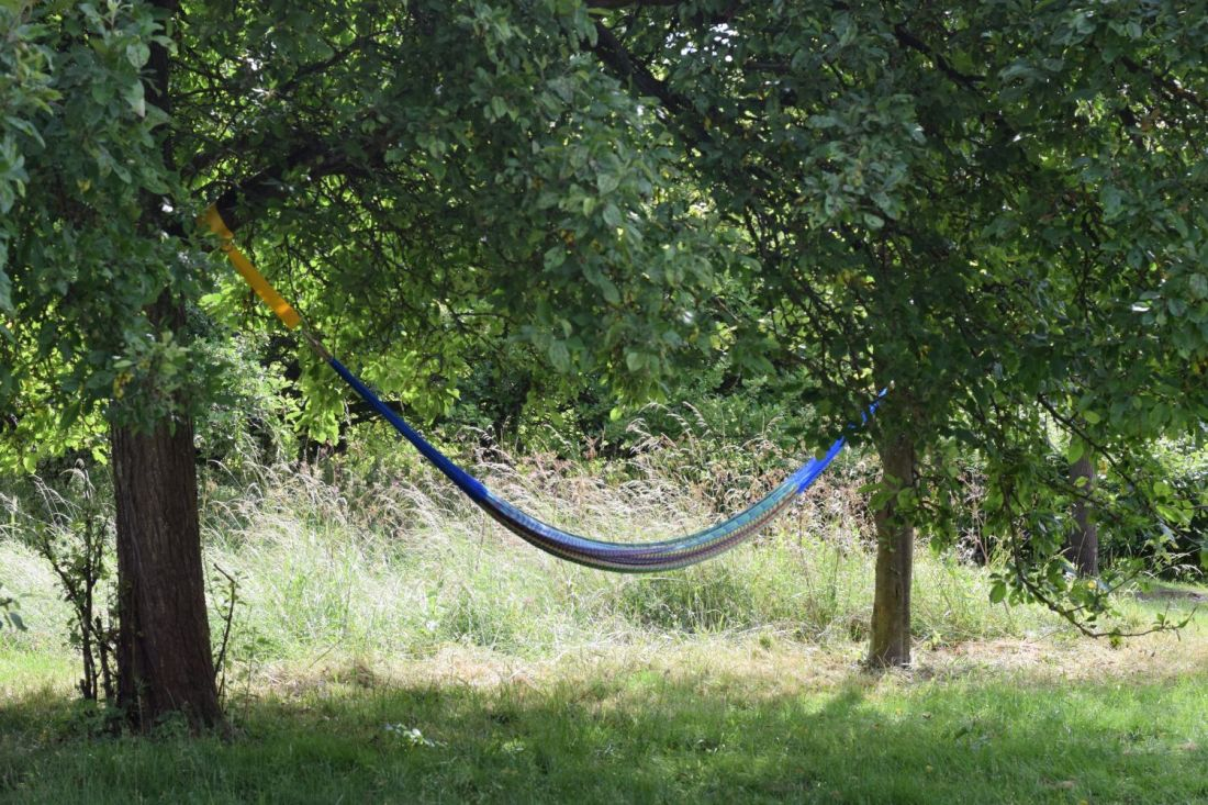 Hammock slung between two fruit trees